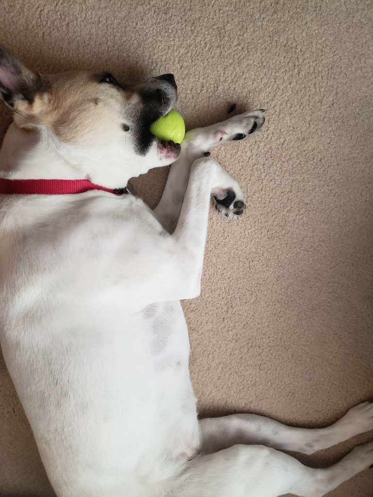 Coda with ball in her mouth